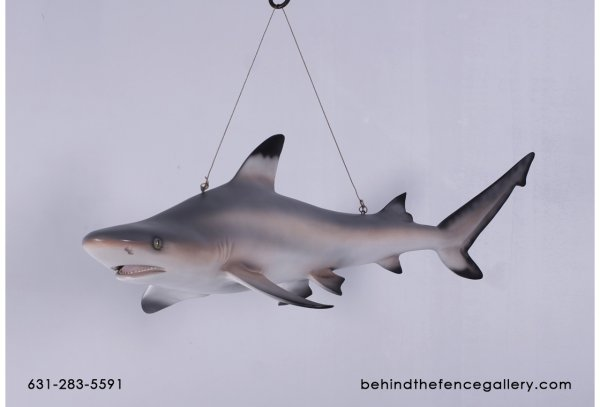 Black Tip Reef Shark Statue