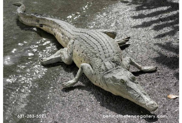 Crocodile Resting 4ft. Statue